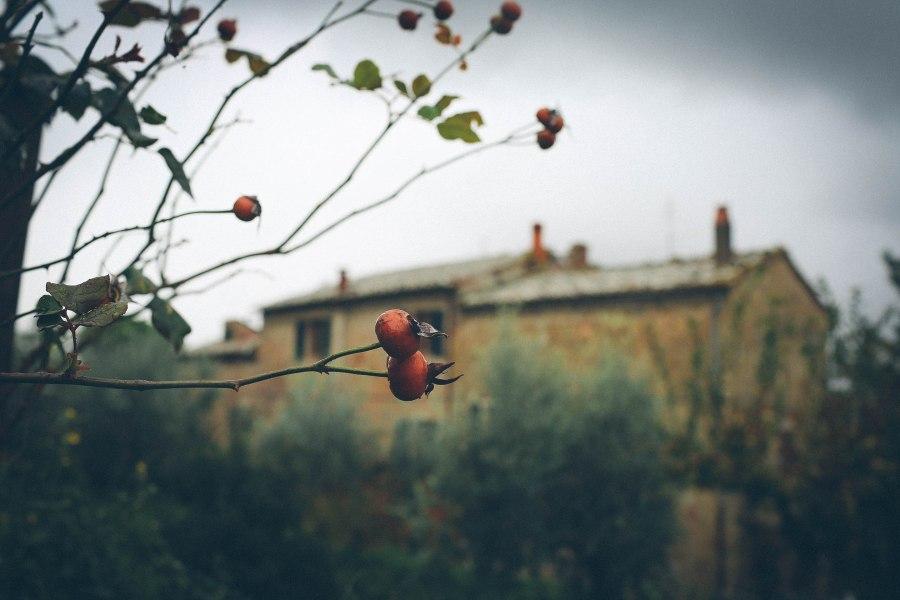 tuscany-4588