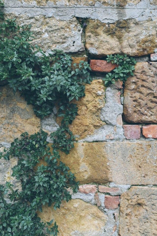 tuscany-4672